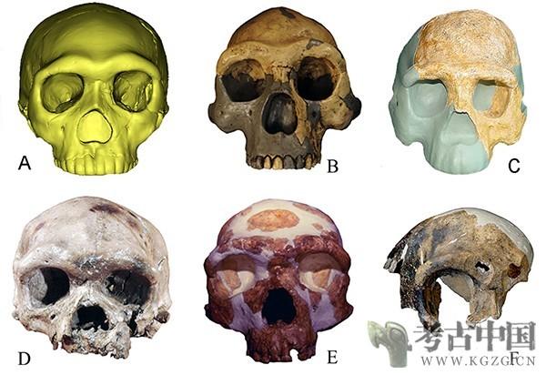 我国学者发现向早期现代人连续演化的更新世中期人类头骨化石